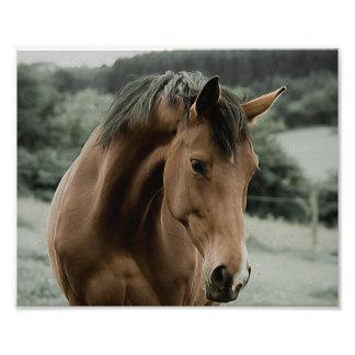 Vintages Pferdetiermalereikunst Kunstfotos