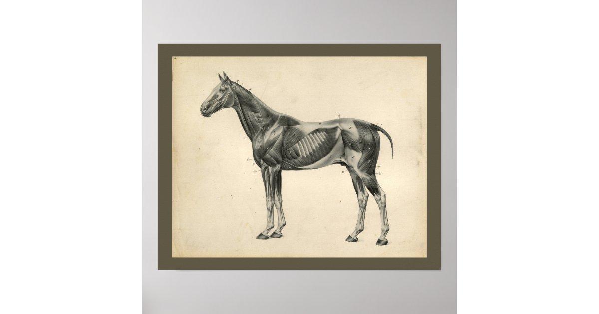 Großartig Röhrbein Pferd Anatomie Bilder - Anatomie Ideen - finotti.info