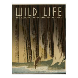 Vintages Reise-Plakat - wild lebende Tiere circa Postkarte