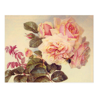 Vintages Rosen-Brautparty Postkarte