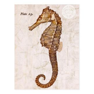 Vintages Seepferd - antike Seepferde besonders ang Postkarte