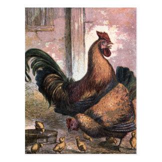Vintages Zeichnen: Hahn und Henne Postkarten