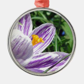 Violet Spring Crocus Silbernes Ornament