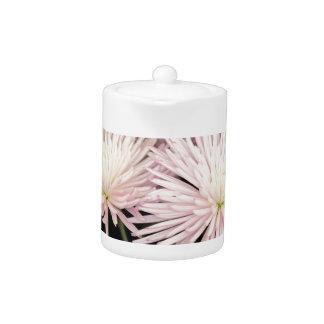Violette weiße Chrysantheme-Blumen auf Schwarzem