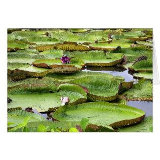 Vitoria Regis, riesige Wasserlilien im Amazonas Karte