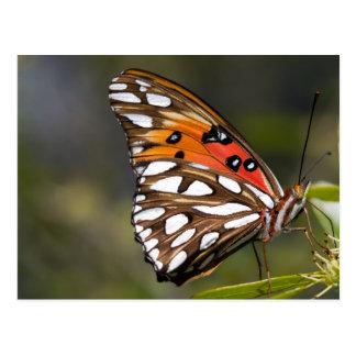 Vizekönig-Schmetterlings-Postkarte Postkarte