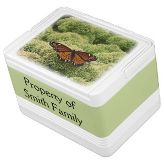Vizekönig-Schmetterlings-schöne Natur-Fotografie Kühlbox