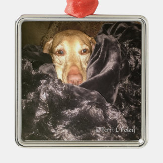 Vizsla Weihnachtsverzierung Silbernes Ornament