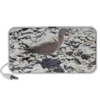 Vogel am Steinboden Lautsprecher