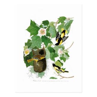 Vögel Amerika Baltimore Orioles John James Audubon Postkarte