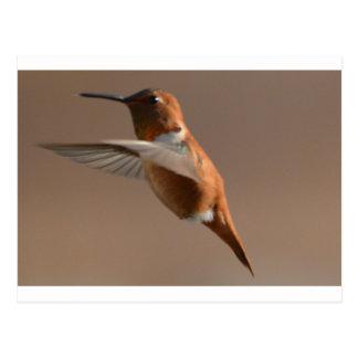 Vogel-Amerikaner Rufus Kolibri-Natur Postkarte