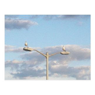Vögel auf einem Lampen-Posten Postkarte