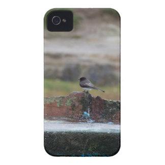 Vogel auf einer Wand iPhone 4 Case-Mate Hülle