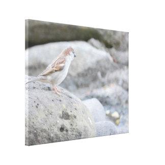 Vogel auf Felsen Leinwanddruck