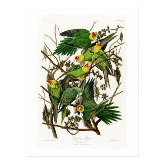 Vögel Carolina-Papageien-Johns Audubon von Amerika Postkarte