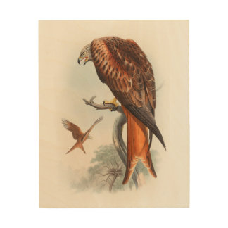 Vögel Drachen Glead Falke-Johns Gould von Holzleinwand