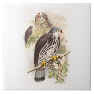 Vögel Honig-Bussard Johns Gould von Großbritannien Fliese