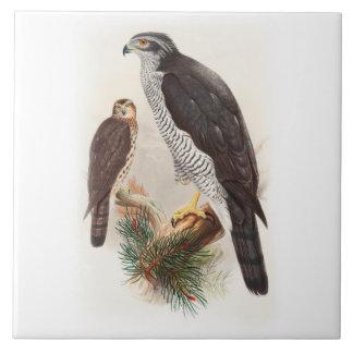 Vögel Hühnerhabicht-Johns Gould von Fliese