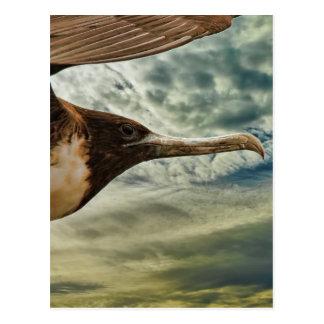Vogel im Flug Postkarte