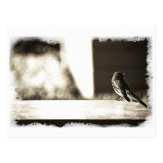 Vogel im Sepia Postkarte
