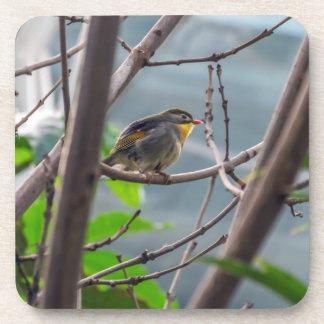 Vogel in den harten PlastikUntersetzer eines Baums Getränkeuntersetzer
