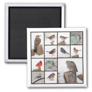 Vögel in der Schnee-Sammlung Quadratischer Magnet