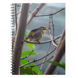 Vogel in einem Baumnotizbuch Notizblock