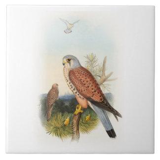Vögel Kestrel-Falke-Johns Gould von Großbritannien Keramikfliese