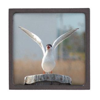 Vögel Kiste