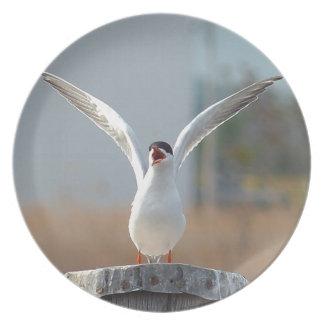 Vögel Melaminteller