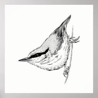 Vogel-Plakat-/Wand-Kunst-Kleiber Poster