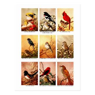 Vögel Postkarte
