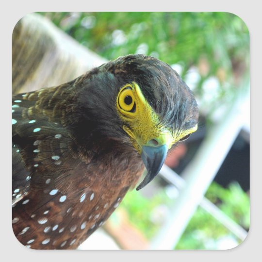 Vögel Quadratischer Aufkleber