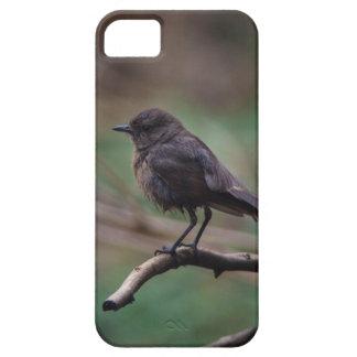 Vogel-Schönheit iPhone 5 Etui
