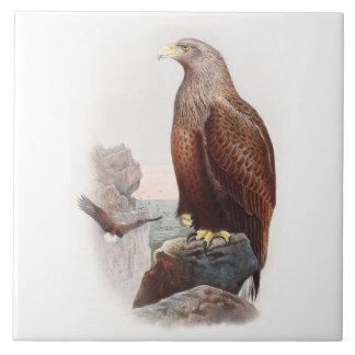 Vögel SeeEagles John Gould von Fliese