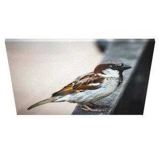 Vogel stehend auf Zaun Leinwanddruck
