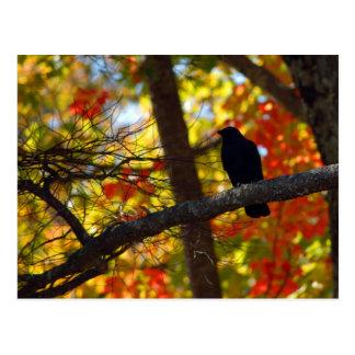 Vogel und Farben Postkarte