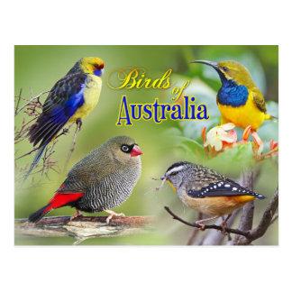 Vögel von Australien Postkarte