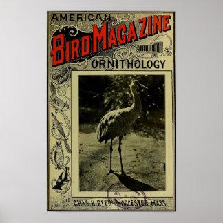 Vogel-Zeitschrift am 3. Juli 1903 Posterdrucke