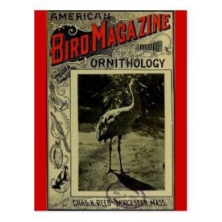 Vogel-Zeitschrift am 3. Juli 1903 Postkarte