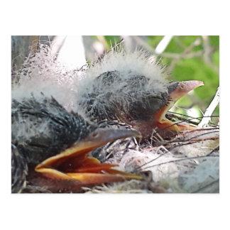 Vogelbabys in einem Nest Postkarte