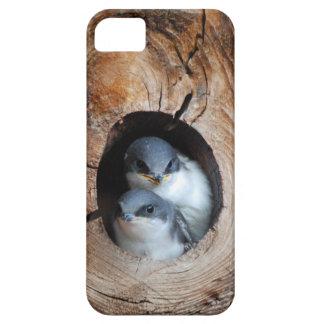 Vogelbabys iPhone 5 Cover