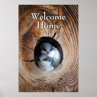 Vogelbabys Poster