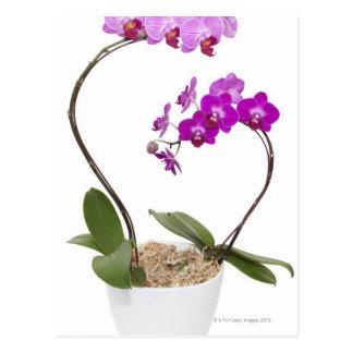 Volle Rahmen Orchidee abgeschieden auf einem Postkarte