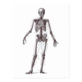 Volles Skelett Postkarten