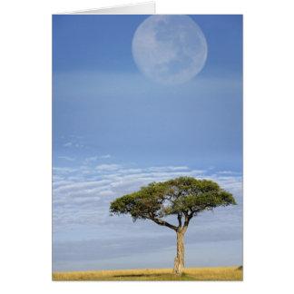 Vollmond über Akazienbäumen, Masais Mara, Karte