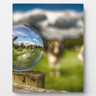 Von Gras zu Glas Fotoplatte