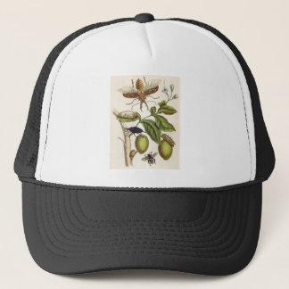 von Metamorphose insectorum Surinamensium, Platte Truckerkappe