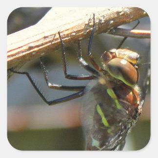 Vorzüglich ausführliche Libellen-Aufkleber Quadratischer Aufkleber