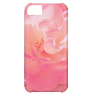 Vorzügliche rosa Rose